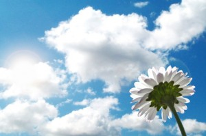 Flower-sky-clouds-sunshine-mood-485x728