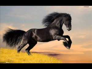 bareback horse