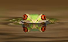 frog peaking water