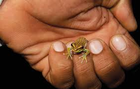 tiny frog on finger