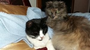 Nenya and Vincent